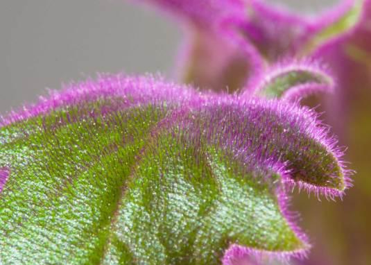 leaf macro photo