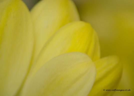 macro petals