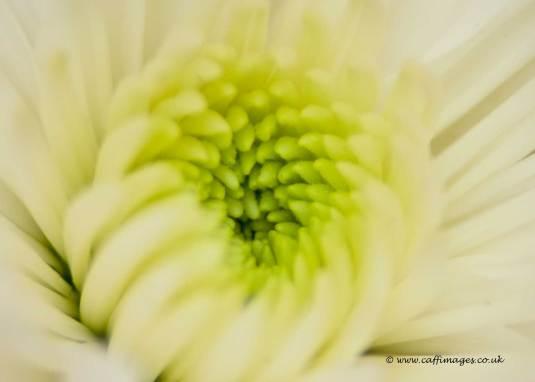 Perfect petals macro