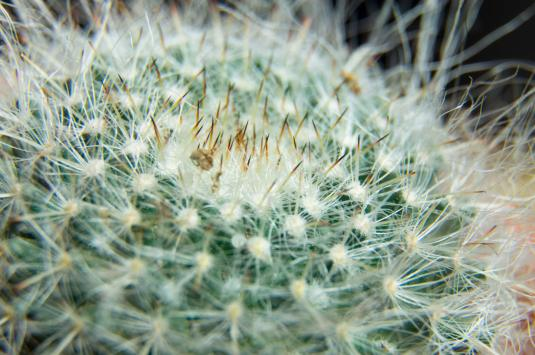 cactus-macro-spines